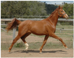 Youngsters Sold Remi Pegasus